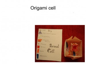 origami biology8