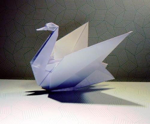 łabędź - Luis Fernandez